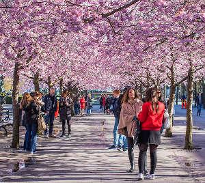 Cosa vedere nella City a Stoccolma: Kungsträdgården